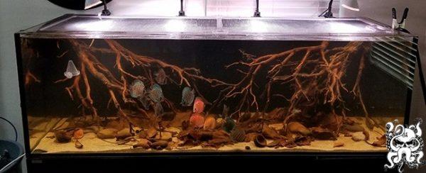 Octo Lid Aquarium Fish Tank Lid