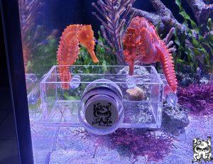 Seahorse Feeding Trough