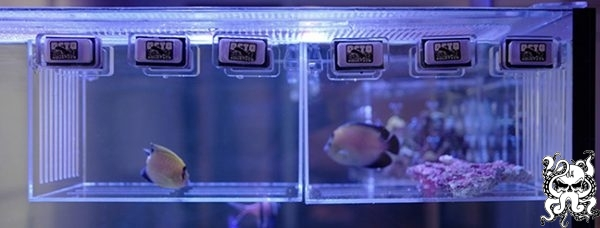 Octo Aquatics The SHU Acclimation/Coral/Mushroom Box